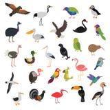 Big vector birds set Royalty Free Stock Photo
