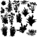 Big VECTOR collection of plant Royalty Free Stock Images