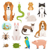 Big vector set of different domestic animals. Cats, dogs, hamster and other pets in cartoon style Stock Images