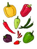 Big vector set with different varieties of pepper. royalty free illustration