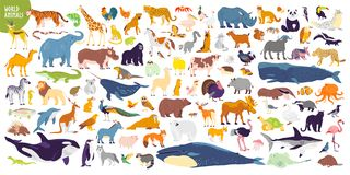 Big Vector Set Of Different World Wild Animals, Mammals, Fish, Reptiles And Birds. Rare Animals. Funny Flat Characters, Good For B Royalty Free Stock Photography