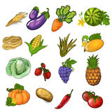 Big vector set of vegetables, berries and fruits Royalty Free Stock Images