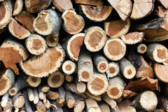 Big wall of stacked wood logs Royalty Free Stock Photography