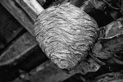 Big wasp nest in the attic of a country house close up. Big wasp nest in the attic of a country house royalty free stock images