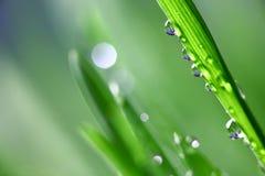 Free Big Water Drop Royalty Free Stock Photos - 8823538