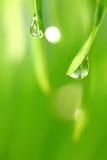 Big water drop Stock Image