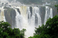 Big waterfalls Iguassu in jungle forest Royalty Free Stock Images