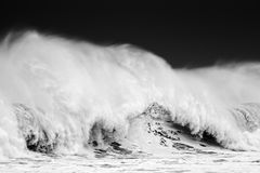 Big wave in black and white Stock Photography