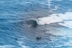 Big wave surfer royalty free stock photo