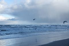 Big waves and gulls after sea storm in the morning in Baltic sea in Stegna. Selective focus stock photos