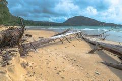 The big waves kill big pine trees Stock Image