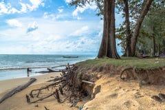 The big waves kill big pine trees Royalty Free Stock Images