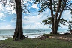 The big waves kill big pine trees Stock Photos