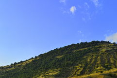 Beautiful hill full of trees. A beautiful curved hill full of trees in Prespes region, Greece royalty free stock images