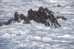 Coastal Sea Storm tempest big wave like liquid snow Royalty Free Stock Photography
