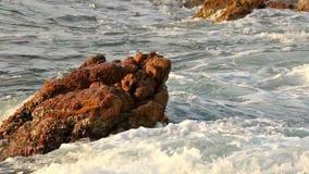 Big waves stock footage