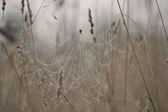 A big web in the field flowered stock photography