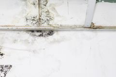 Big wet spots and black mold on the wall of the domestic house room after heavy rain and lot of water. Big wet spots and cracks and black mold on the wall of the royalty free stock images