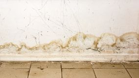 Big wet spots and black mold on the wall of the domestic house room after heavy rain and lot of water. Big wet spots and cracks and black mold on the wall near stock photo