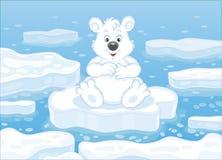 Polar bear on an ice floe Stock Image