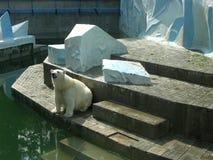 Big white bear Royalty Free Stock Photos
