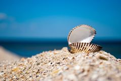 Free Big White Beautiful Open Shell On The Right On A Background Of Blue Sea Sand Summer Sunny Day Royalty Free Stock Image - 99310006