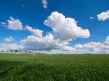 Big white clouds over a green meadow and blue sky Royalty Free Stock Photography