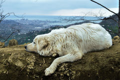 Big white dog in mountains royalty free stock photos