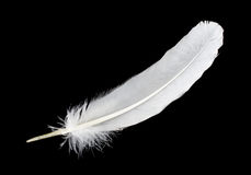 Big white feather Stock Image