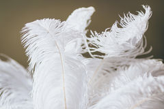 Big white feathers. Close-up. Stock Images