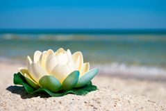 White lotus flower with green leaves lies on the sand on a background of blue sea and blue sky summer vacation Royalty Free Stock Images