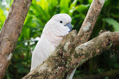 Big white parrot on a tree branch Stock Photography