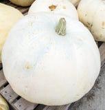 Big White Pumpkin Stock Photography