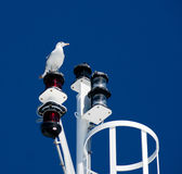 Big white seagull on blue sky background Stock Photos