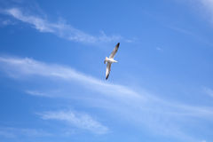 Big white seagull on cloudy sky background Stock Image