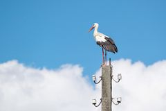 Big white stork against the sky with clouds Stock Photography