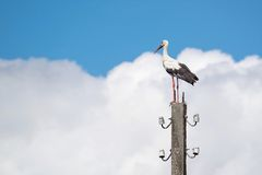 Big white stork against the sky with clouds Royalty Free Stock Photography