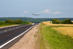 Big white Stork flies over the road Royalty Free Stock Photos