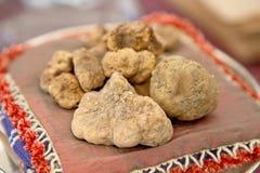 Big white truffles stock photos