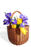 Big wicker basket with the spring flowers Royalty Free Stock Photography