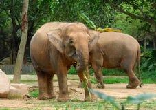 Big wild African elephant Royalty Free Stock Image
