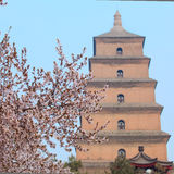 Big wild goose pagoda Stock Photography