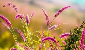 Big and wild grasses on agricultural field. stock photos