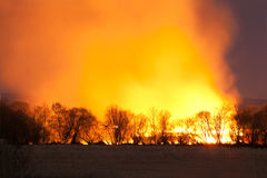 Night wildfire. Big wildfire in forest by night stock photography