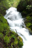 Big Willow Canyon Falls. Water fall deep in Big Willow Canyon, UT Royalty Free Stock Photography