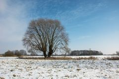 Big willow tree and snow on the meadow, horizon and blue sky. View in winter day stock photography