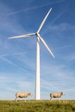 Big wind turbine with two sheep in front Stock Images