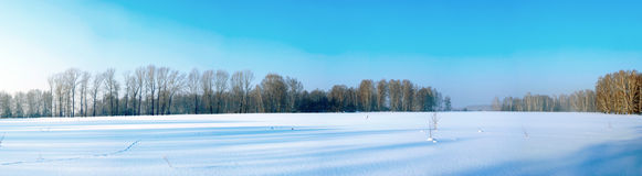 The big winter field. An image of the big winter field. A panorama Royalty Free Stock Image