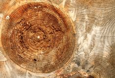 Big wood knot Stock Photos