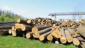 Big wooden logs. Wooden logs in the sawmill. Steadycam shoot